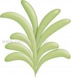 Θαλασσινό Φυτό